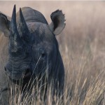 014-AFRICA-ZIMBABWE-INERE-Rhinoceros-01