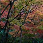 029-ASIA-JAPAN-KYOTO