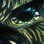039-OCEANIA-TONGA-VAVA'U-Giant.clam