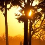 047-AFRICA-ZIMBABWE-HWANGE