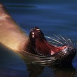 053-SOUTH.AMERICA-ECUADOR-GALAPAGOS-Sea.lion