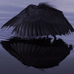 075-AFRICA-OKAVANGO-BOTSWANA-BALCK
