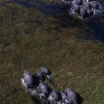 079-AFRICA-BOTSWANA-CHOBE-Elephants.Aerial.view