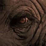092-AFRICA-ZIMBABWE-HWANGE-Elephant