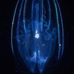 111-EUROPE-IRELAND-Plankton