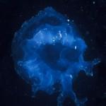 115-ASIA-THAILAND-Jellyfish