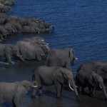 137-AFRICA-BOTSWANA-CHOBE-Elephants