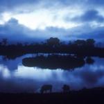 Wildlife, Safari, night, Animal, Africa, Kenya, Aberdare, buffalo