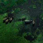 Wildlife, Safari, animals, Africa, Amboseli, zebras, swamps
