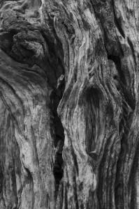 02-Zambie-Kafue-tronc d'arbre
